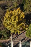 Photographie n°bb093591 du taxon