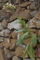 Photographie n°bb094191 du taxon