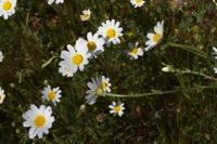 Photographie n°bb094980 du taxon