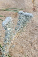 Photographie n°bb095638 du taxon