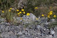 Photographie n°bb097155 du taxon