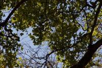 Photographie n°bb098750 du taxon