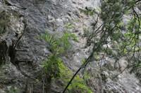 Photographie n°bt000164 du taxon