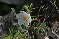 Photographie n°bt002211 du taxon