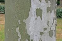 Photographie n°bt002801 du taxon