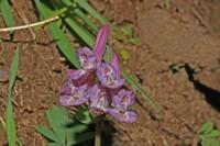 Photographie n°bt005404 du taxon