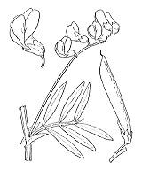 Photographie n°1043.png du taxon