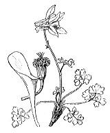 Photographie n°110.png du taxon