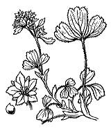 Photographie n°1109.png du taxon