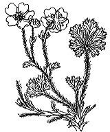 Photographie n°1143.png du taxon
