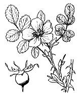 Photographie n°1218.png du taxon