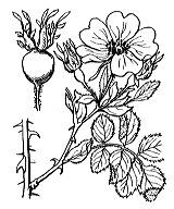 Photographie n°1222.png du taxon