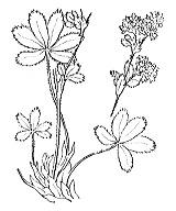 Photographie n°1245.png du taxon