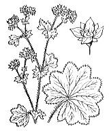 Photographie n°1251.png du taxon