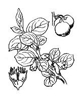 Photographie n°1257.png du taxon