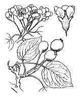 Photographie n°1261.png du taxon
