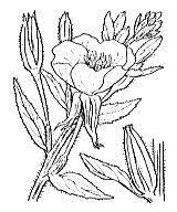 Photographie n°1295.png du taxon