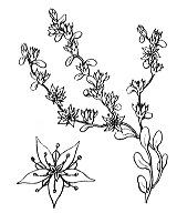 Photographie n°1356.png du taxon