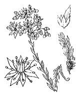 Photographie n°1383.png du taxon