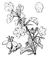 Photographie n°1397.png du taxon