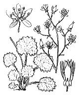 Photographie n°1408.png du taxon