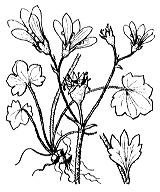 Photographie n°1415.png du taxon
