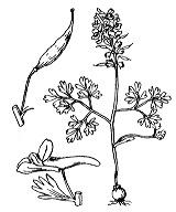 Photographie n°142.png du taxon