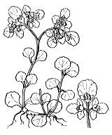Photographie n°1454.png du taxon