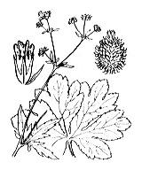 Photographie n°1458.png du taxon