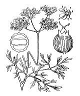 Photographie n°1486.png du taxon