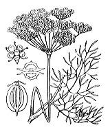 Photographie n°1504.png du taxon