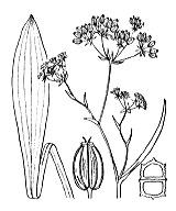 Photographie n°1580.png du taxon