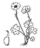 Photographie n°16.png du taxon