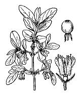 Photographie n°1657.png du taxon