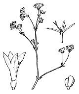 Photographie n°1717.png du taxon
