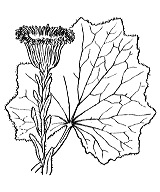 Photographie n°1784.png du taxon