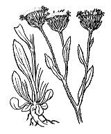 Photographie n°1793.png du taxon