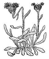 Photographie n°1796.png du taxon