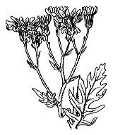 Photographie n°1826.png du taxon
