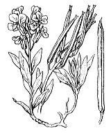 Photographie n°186.png du taxon