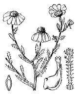Photographie n°1949.png du taxon