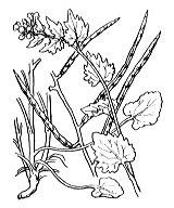 Photographie n°200.png du taxon