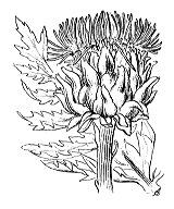Photographie n°2001.png du taxon