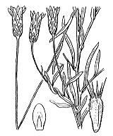 Photographie n°2116.png du taxon
