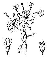 Photographie n°2427.png du taxon