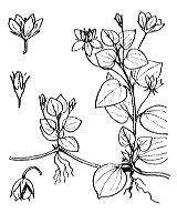 Photographie n°2450.png du taxon
