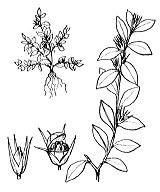 Photographie n°2453.png du taxon