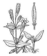 Photographie n°2503.png du taxon