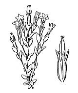 Photographie n°2504.png du taxon