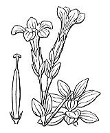 Photographie n°2515.png du taxon